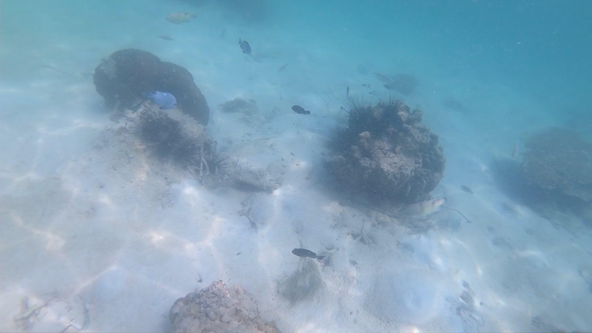 マヌカン島 ツアー